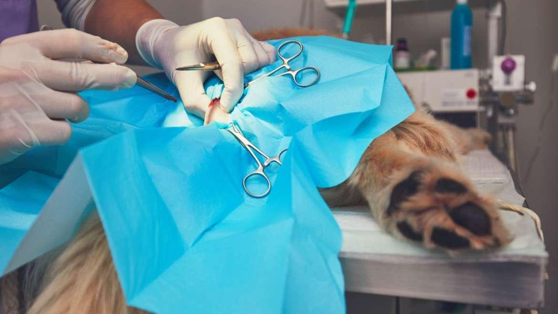 Chirurgie Veterinara